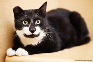 Milton - one of Debbie's favorite kitties