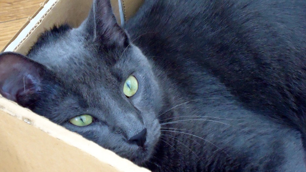 Smokey in a box