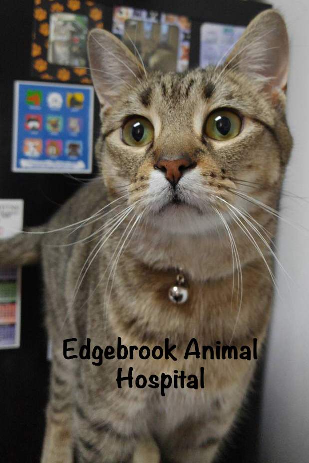 Edgebrook Animal Hospital