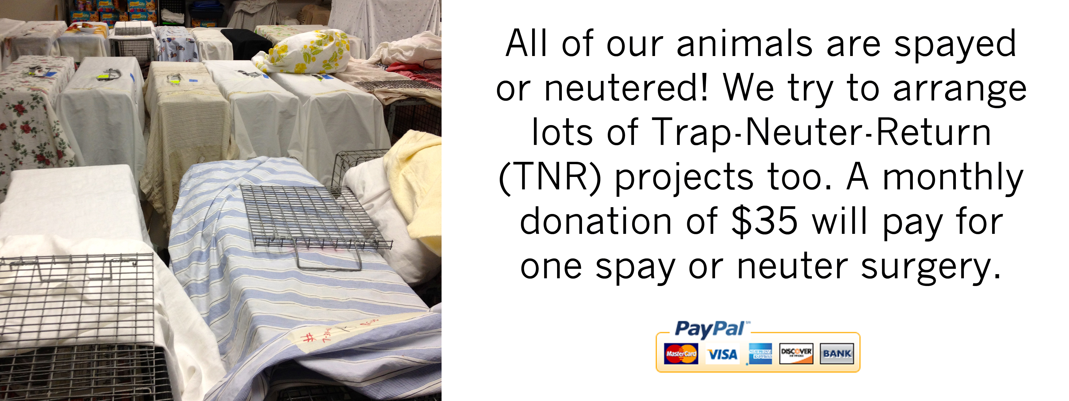 Snip, snip: spay/neuter time!