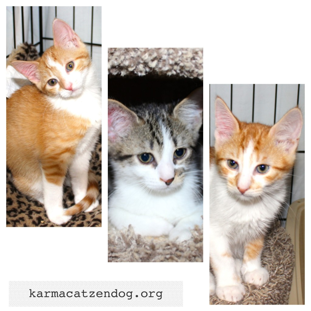 Anya, Oz &amp; Xander - adopt them!!
