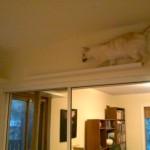Gingko+on+shelf+1-737960