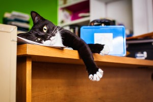 Office Cat Kandy, image courtesy Michelle Arlotta Photography