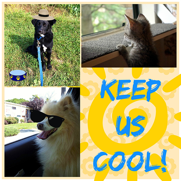 7 Ways to Keep Your Pet Cool This Summer