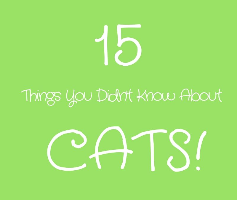 15 Things You Didn't Know About Cats