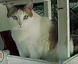 Creme-puff-oldest-cat