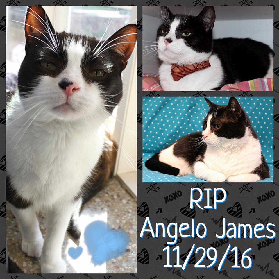 RIP Angelo