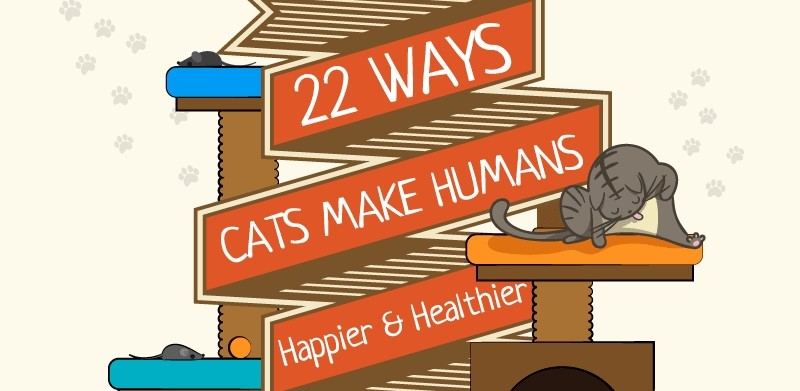 22 Ways Cats Make People Happier (And Healthier)!