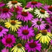 Spring Flower Power