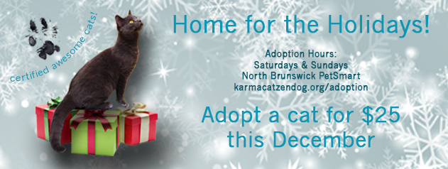 """Home for the Holidays"" – Introducing Our Limited Time Cat Adoption Special!"