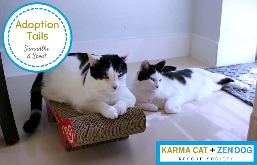 Adoption Tails #1: Samantha & Scout