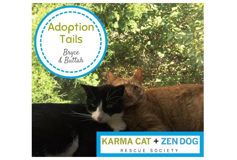 Adoption Tails #2: Bryce & Buttah
