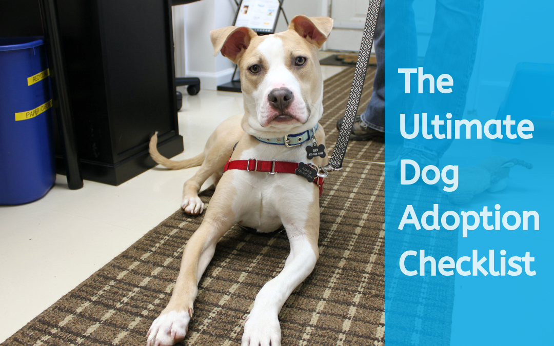 The Ultimate Dog Adoption Checklist