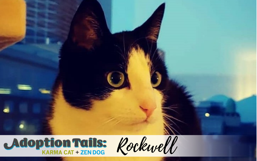 Adoption Tails #7: Rockwell