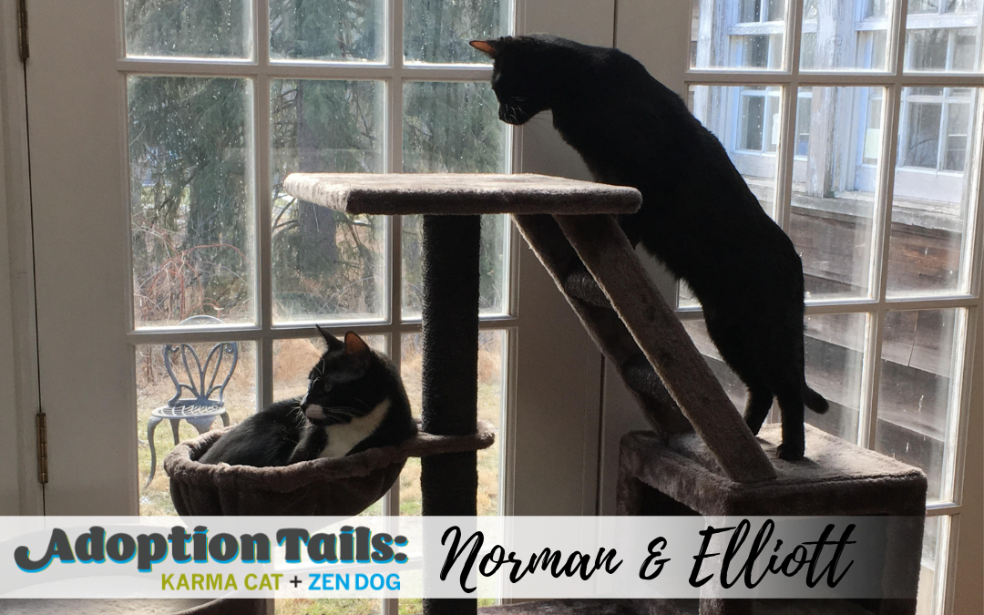 Adoption Tails #8: Norman & Elliott