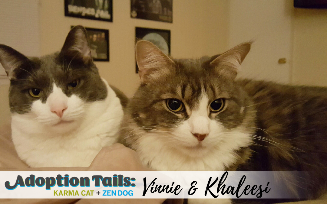 Adoption Tails #9: Vinnie & Khaleesi