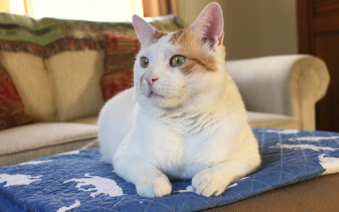 FIV Facts & Myths: What It Really Is & What You Need to Know