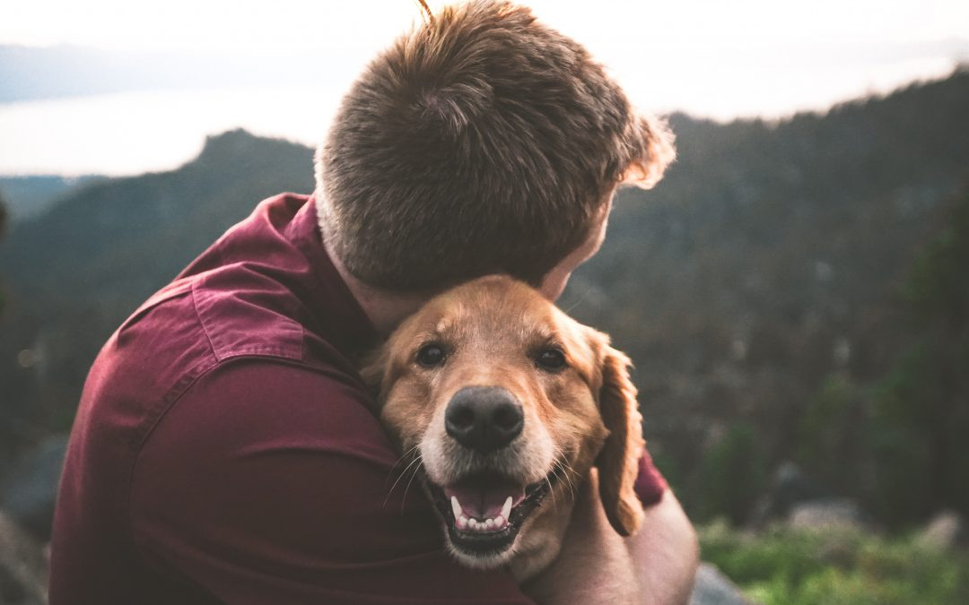 Coping with Loss: Tips for Grieving a Pet (for Humans and Animals)