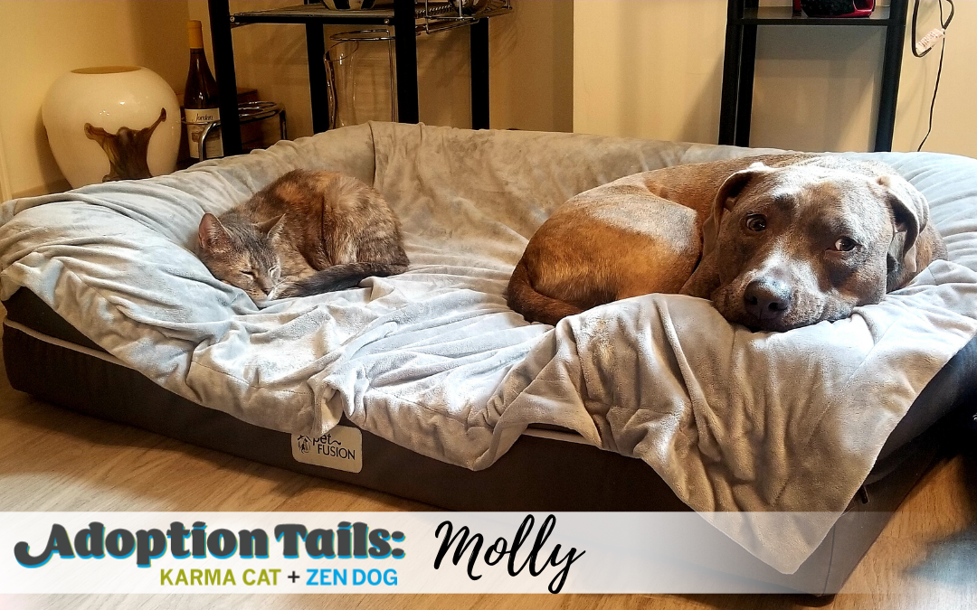 Adoption Tails #15: Molly