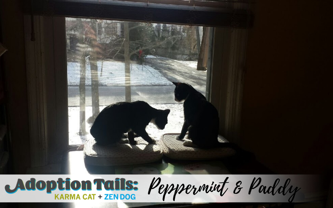 Adoption Tails #17: Peppermint and Paddy