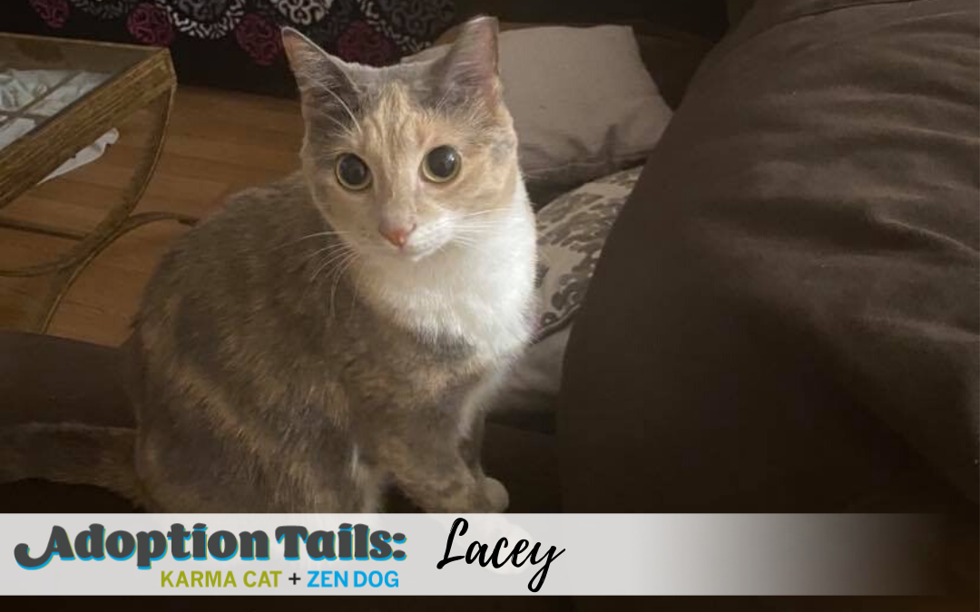 Adoption Tails #19: Lacey