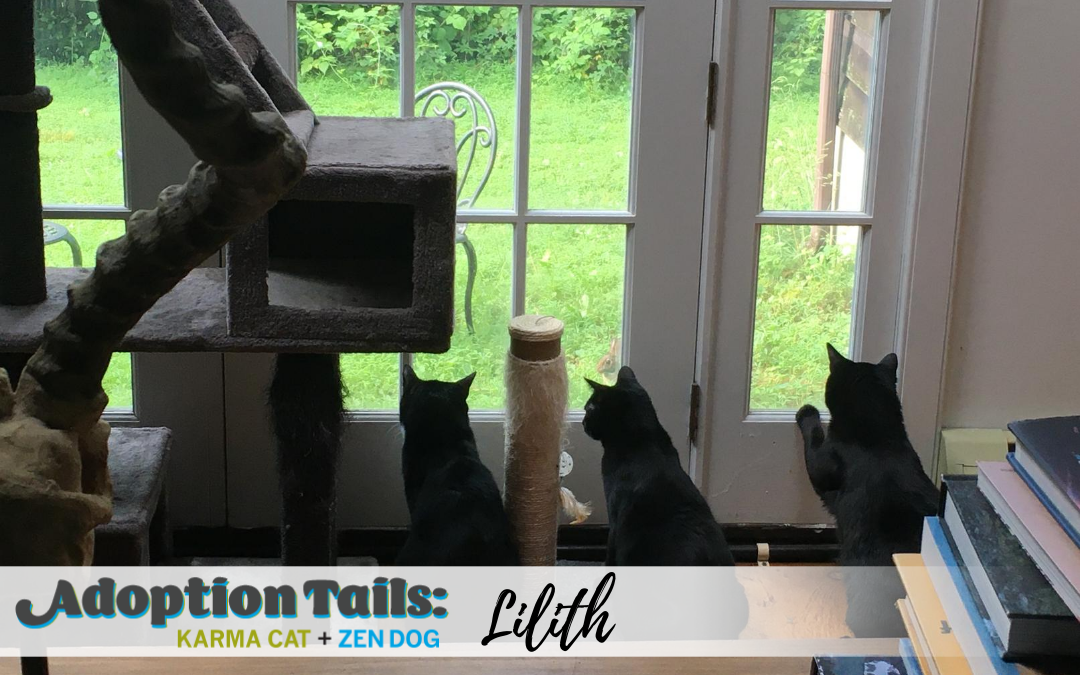 Adoption Tails #21: Lilith