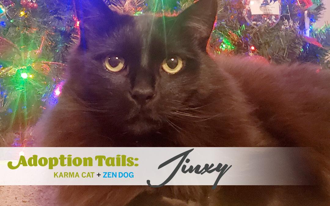 Adoption Tails #23: Jinxy